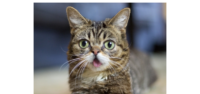 Lil BUB Event to Help Cats in Tennessee