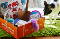 Cheers Actor Now Heads Subscription Box for Cats and More