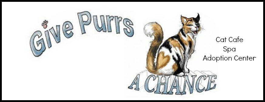 Give Purrs A Chance Cat Cafe Opens In West Virginia Cattipper
