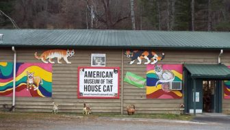 The American Museum of the House Cat Opens