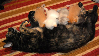Fido + Fluffy's Freebie Friday Salutes the Cat Moms