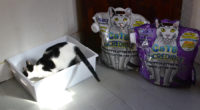 10 Ways to Help Your Cat Love the Litterbox