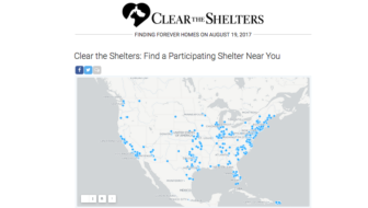 Get Ready for Clear the Shelters Day! #ClearTheShelters