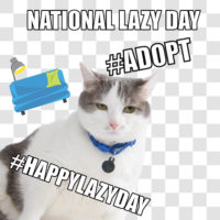 National Lazy Day- Social Paws Campaign Promotes Pet Adoption