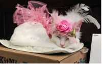 Matilda's Annual Party at The Algonquin Helps Cats in Need