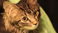 St. Louis Cardinals to Host Rally Cat Appreciation Day