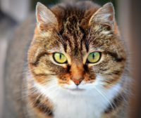 Celebrate International Cat Day on August 8 #internationalcatday