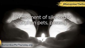 September 28 is #RememberMeThursday   #RemembertheRescue