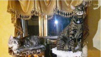How Long is the World's Longest Cat Tail? Cat Friends Set World Records