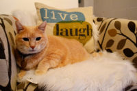 7 Tips for Visiting a Cat Cafe