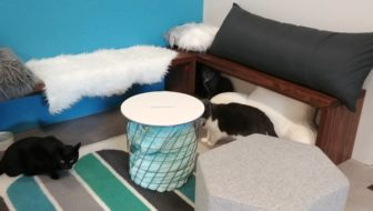 Charm Kitty Cafe to Open in Baltimore
