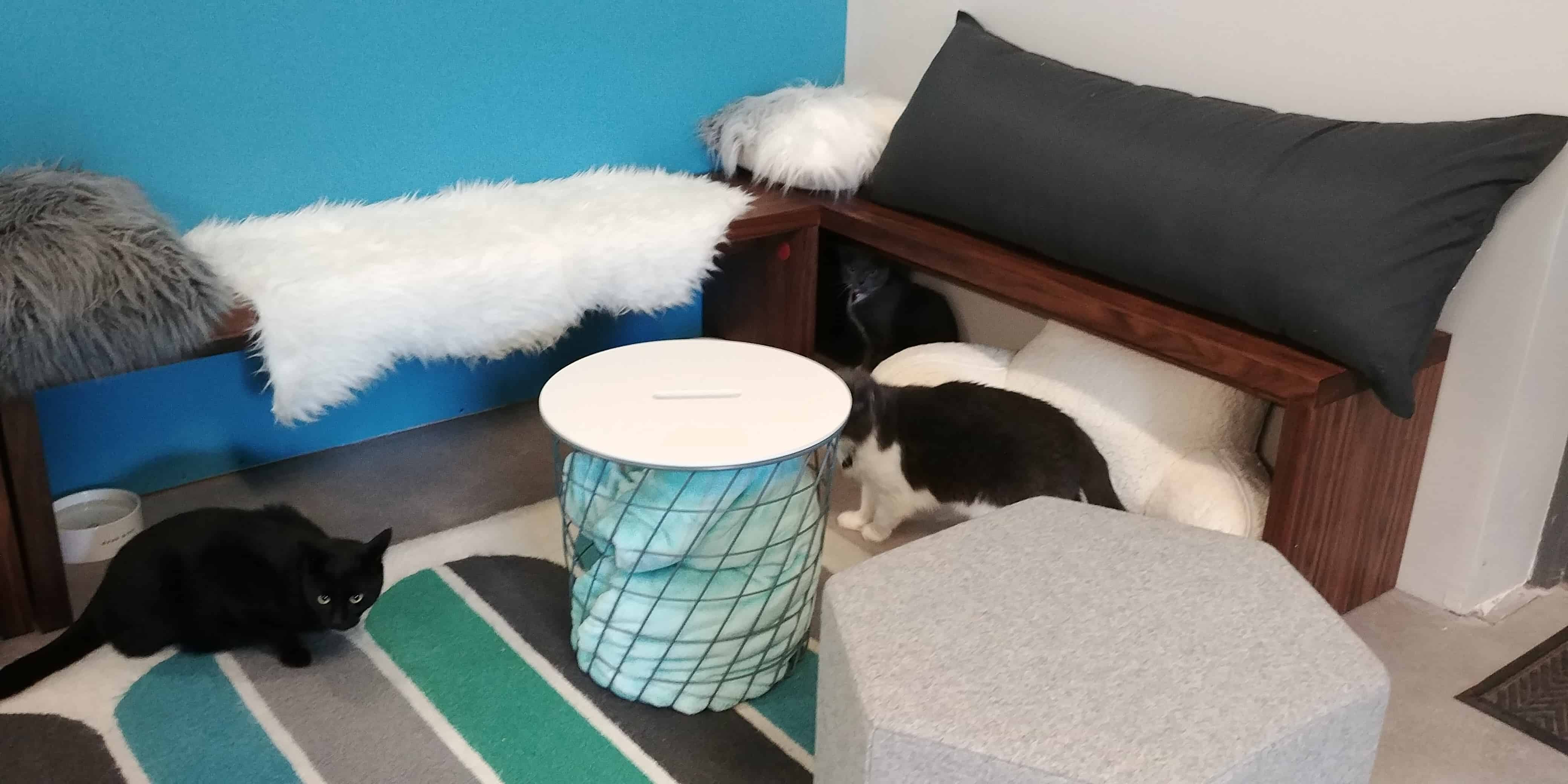 Charm Kitty Cafe to Open in Baltimore CatTipper