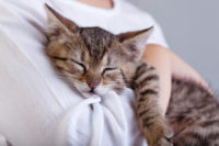 7 Signs Your Cat May Be Hiding an Illness