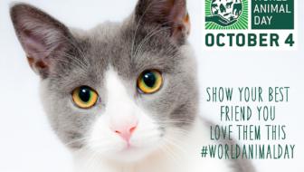 October 4 is #WorldAnimalDay