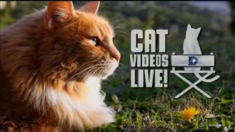 Cat Videos Live!, Kitty Bungalow Art Show Help Cats in Need