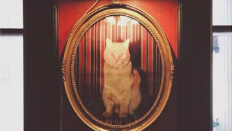 The Ghost Cat of The 1886 Crescent Hotel and Spa