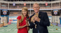 Have You Marked Your Calendar for the Kitten Bowl?