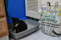 Introducing Your Kitten to a New Litter