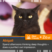 Microsoft's Social Chatbot Helps Cats in Need for Black Cat Day