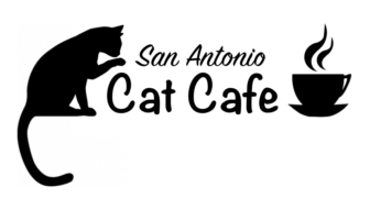 San Antonio Cat Cafe Opens