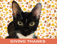 Giving Thanks for Jetty and So Many More Pets