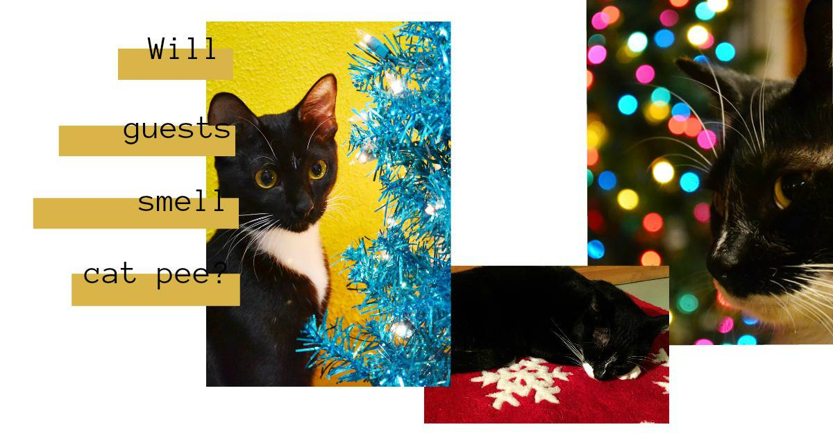 Will Your Holiday Guests Smell Cat Pee??
