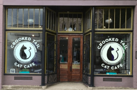 The Crooked Tail Cat Cafe Opens in Greensboro, North Carolina