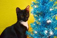 Jetty vs. the Holiday Decorations