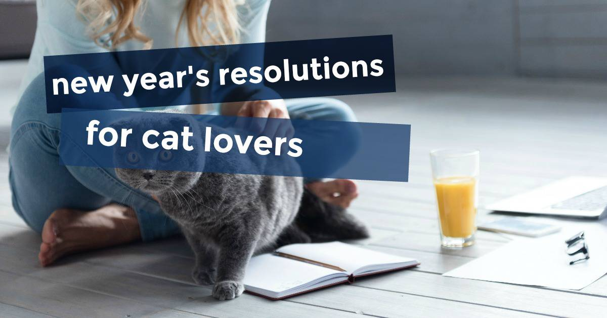 6 New Year's Resolutions for Cat Lovers!