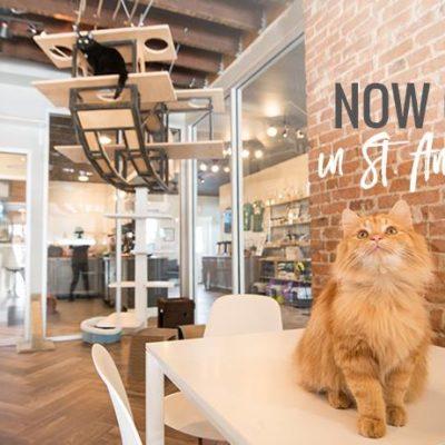 Gem City Catfe Opens in Dayton, Ohio