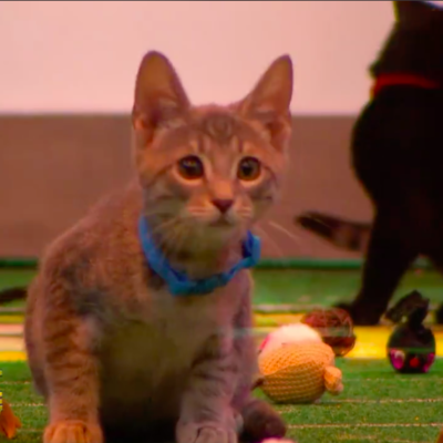 Rescue Kittens to Star in Puppy Bowl XIV's Kitty Halftime Show