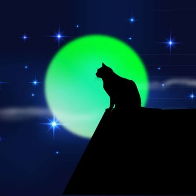 Are Full Moons More Dangerous for Your Cat?