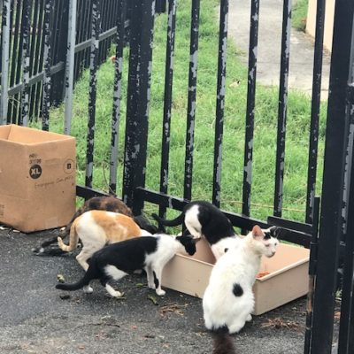 Alley Cat Allies Helps Cats Impacted by Hurricanes Irma and Maria