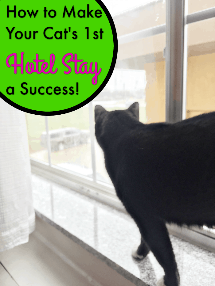 how to make your cat s first hotel stay a success cattipper