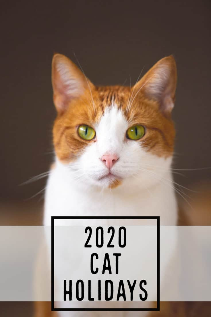 2020 Cat Holidays Special Observances Cattipper